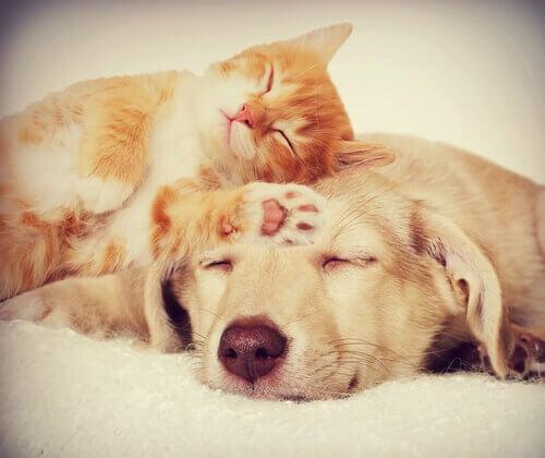 Come aiutare cani e gatti ad andare daccordo