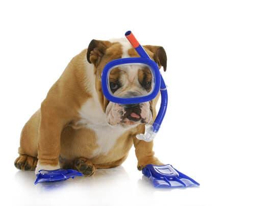 Come insegnare al tuo cane a fare immersioni