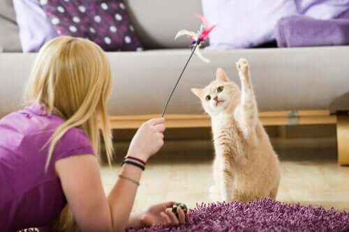 Come intrattenere i tuoi animali domestici durante la quarantena