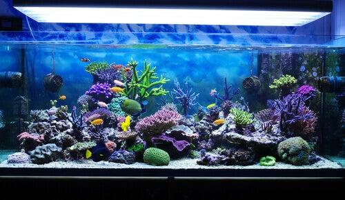Come prendersi cura del proprio acquario marino