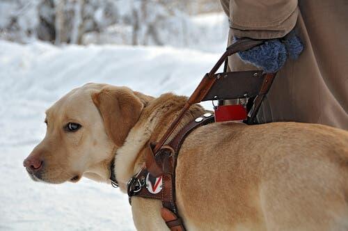 Cosa dovresti sapere sui cani guida