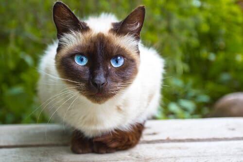 Creare un ambiente arricchente per i gatti