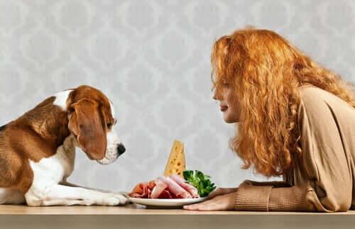 Di quali nutrienti essenziali ha bisogno un cane