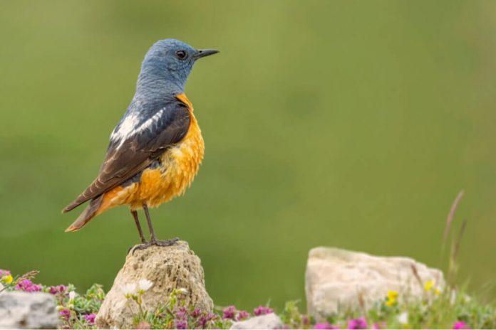 La fauna del Parco nazionale di Guadarrama