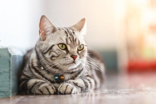 La scienza dietro il benessere dei gatti domestici
