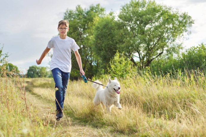 Le passeggiate giornaliere con i cani diventeranno presto legge in