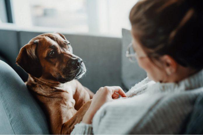 Malattie che producono difficoltà respiratorie nei cani