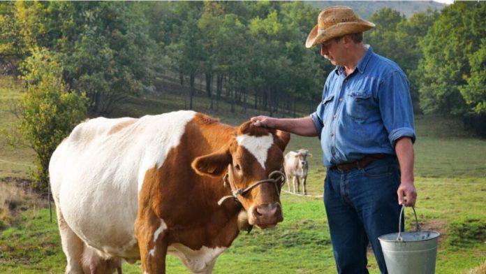 Micotossine e produzione animale I miei animali