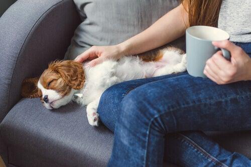 Motivi per cui un animale domestico può perdere conoscenza