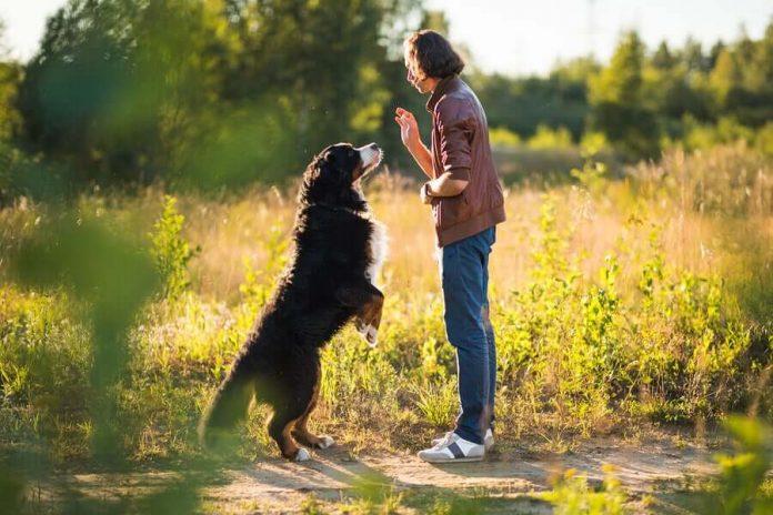 Obiettivi e comandi di addestramento del cane