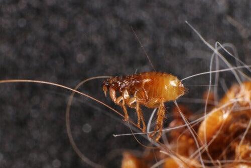 Perché è importante prevenire i parassiti negli animali domestici
