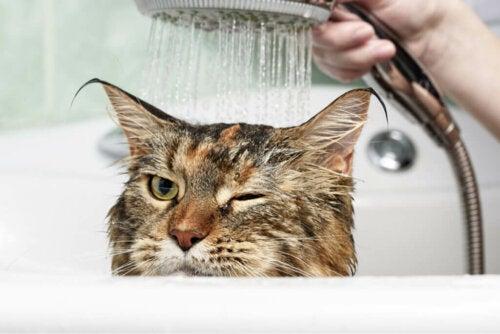Perché i gatti odiano lacqua