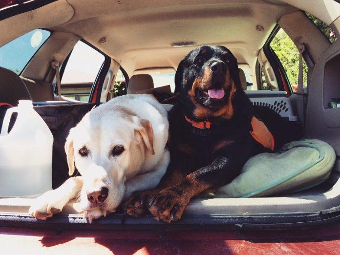Sette consigli per viaggiare meglio con il tuo cane