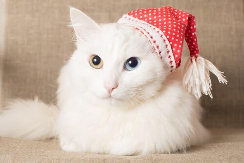 Sette razze di gatti con una folta pelliccia lussureggiante