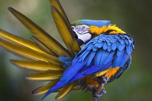 Spiumatura Il mio pappagallo sta tirando fuori le piume