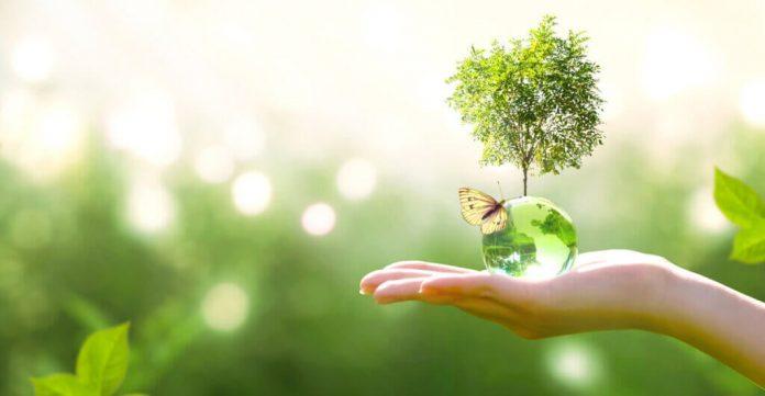 Successione ecologica sapete di cosa si tratta