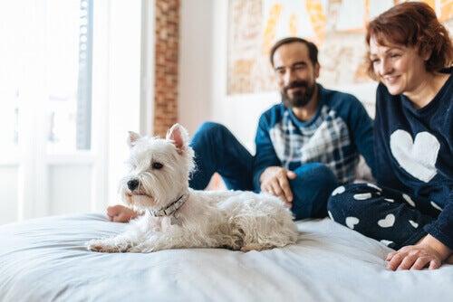 Trasforma la tua casa in una casa adottiva per animali