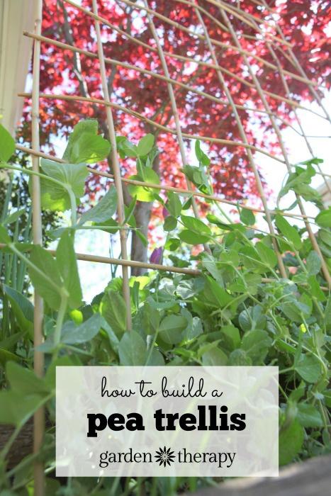 Tutorial per traliccio da giardino Come realizzare un traliccio