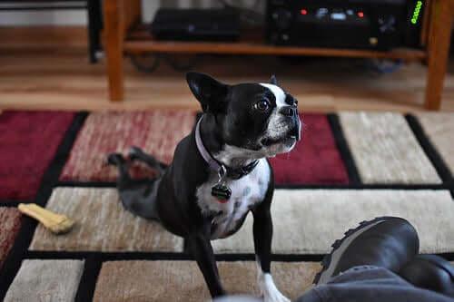 Tutto quello che vuoi sapere sullo yoga per cani