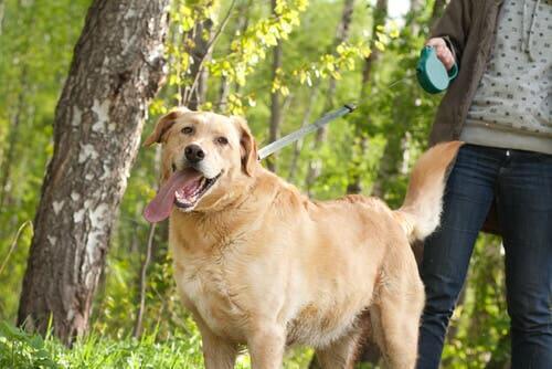Vantaggi e svantaggi dei guinzagli estensibili per cani