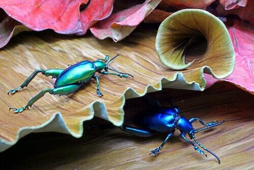 affascinanti specie di coleotteri per stupirti