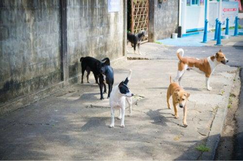 Alla ricerca dei cani smarriti dopo lesplosione di Beirut
