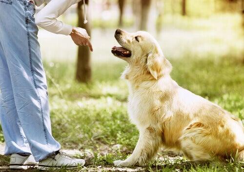 Andare al parco con il cane consigli per un buon