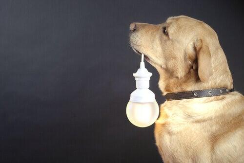 Collari luminosi per cani randagi