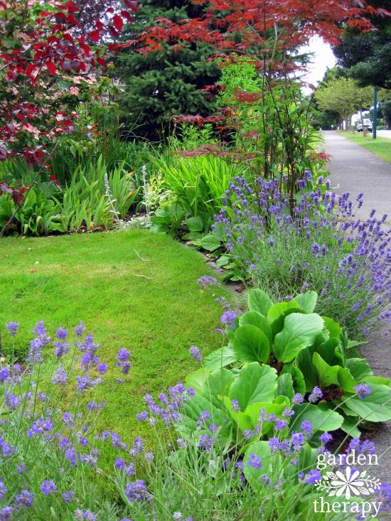 Come iniziare un giardino da zero senza spendere troppo