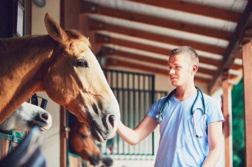 Cosè la laminite nei cavalli Cavalli