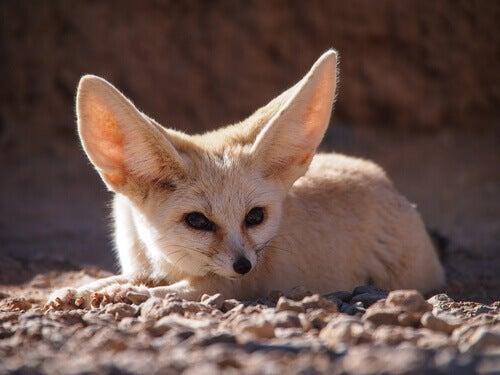 Fauna marocchina incredibile e diversificata