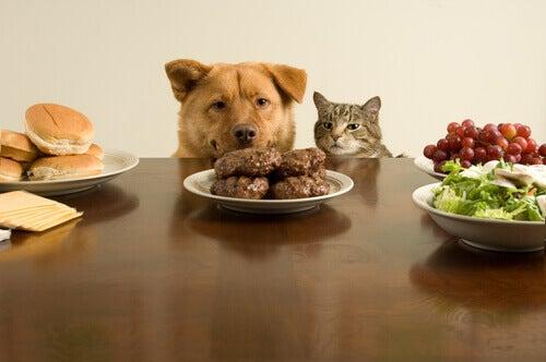 Gatti e cani possono mangiare la stessa cosa