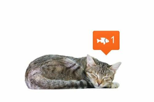 I social network cambiano il modo in cui percepisci gli