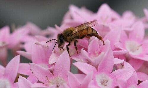 Limportanza delle api nellecosistema