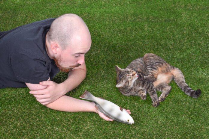 Linterazione sociale di un gatto fatti interessanti