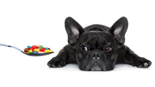 Le vitamine essenziali di cui il tuo cane ha bisogno
