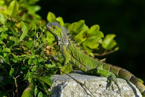 Scopri cinque diversi animali che vivono sugli alberi