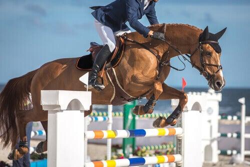 Scopri questi sport equestri