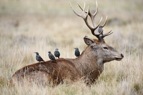 Simbiosi nel regno animale