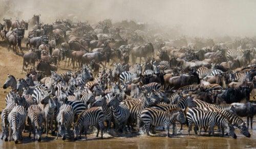 Tutto sugli animali migratori I miei animali